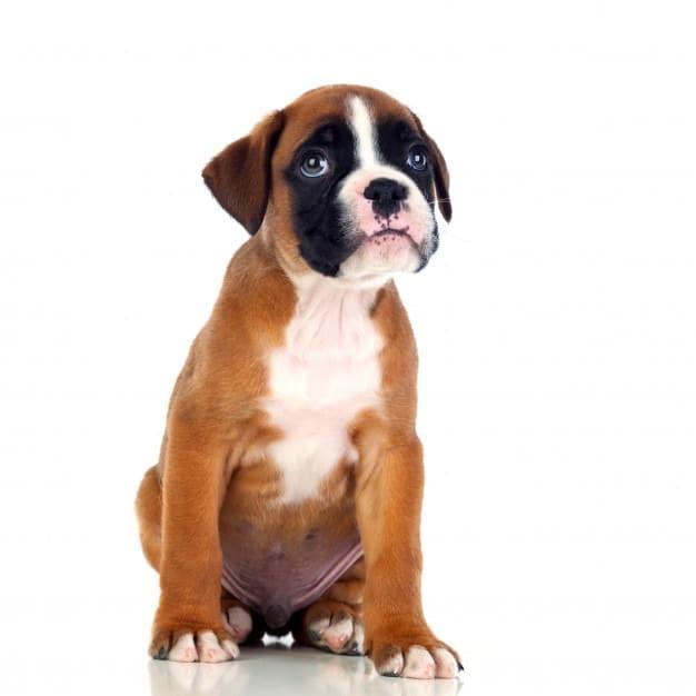transporte de perros en españa