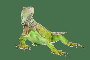 viajar con reptiles madrid