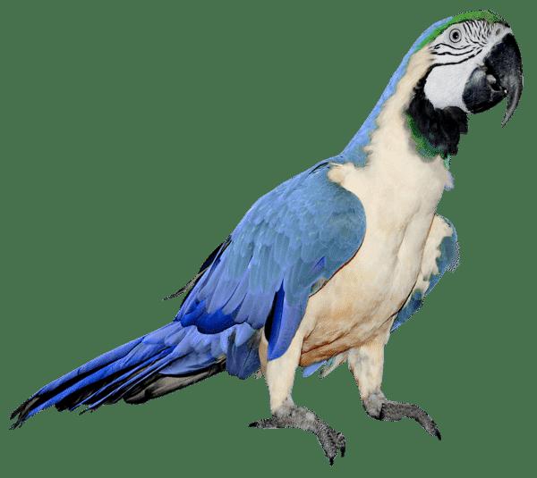 transporte de loros y aves españa