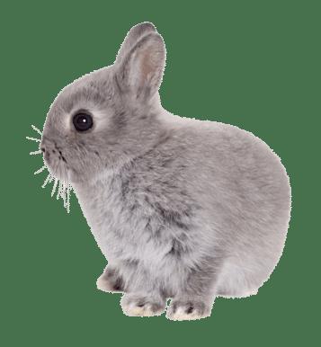 traslado de conejos madrid