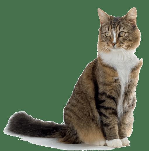 traslados de gatos por carretera