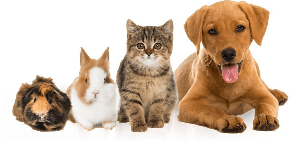 transporte de mascotas myanimalcar