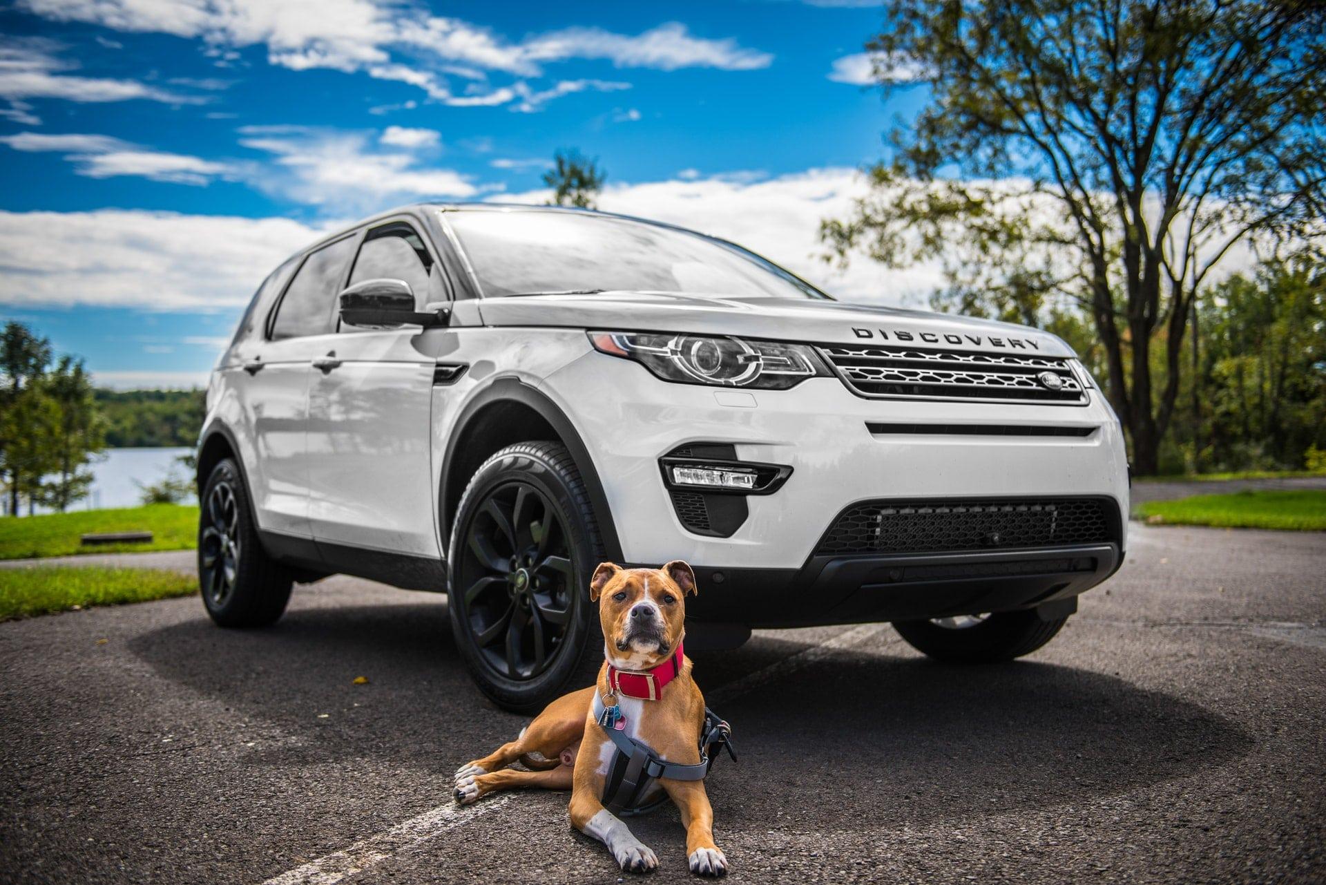 transporte de mascotas en coche
