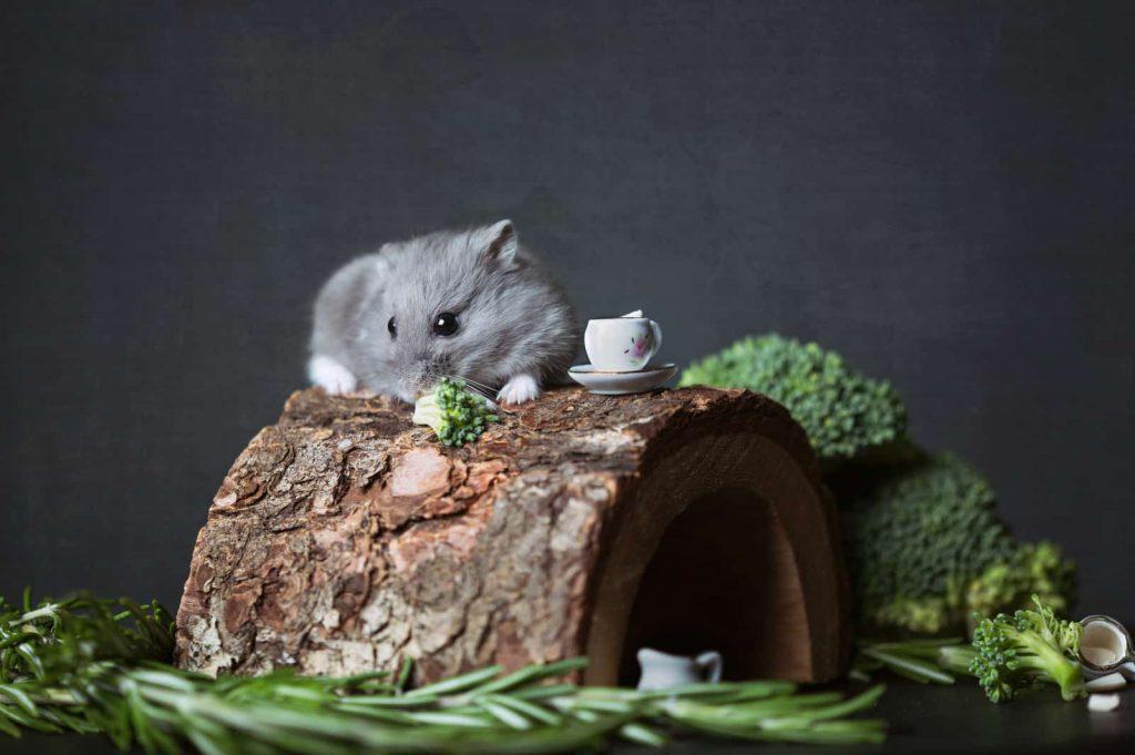 hamster-mascota-niños