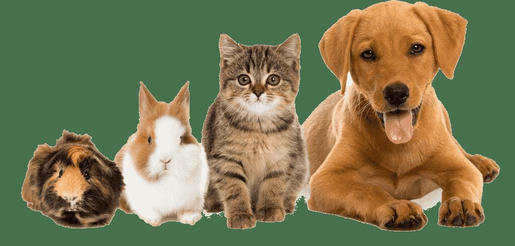 transporte-de-mascotas-madrid-myanimalcar-good