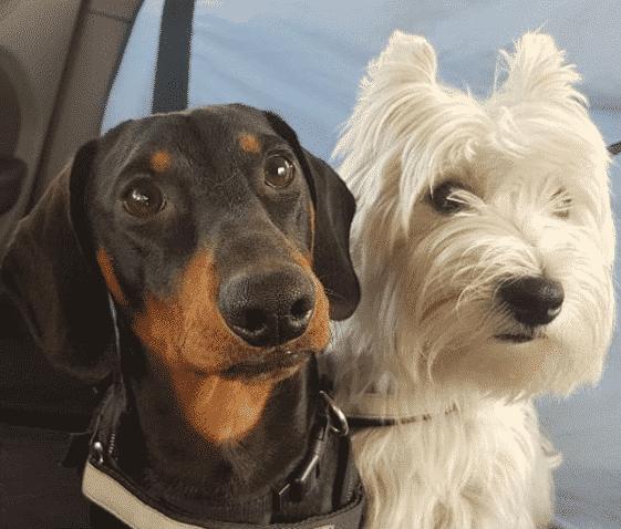 perros-en-transporte-de-mascotas