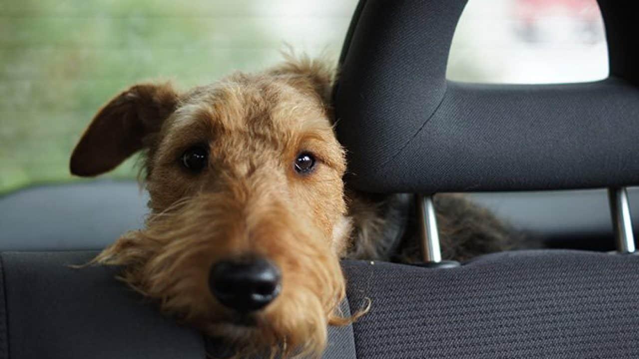 taxis para mascotas en madrid