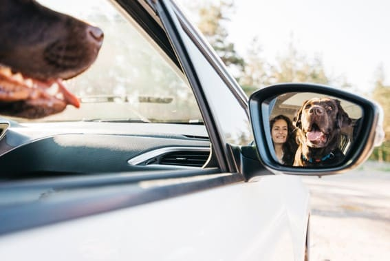 viajar en coche con mi perro