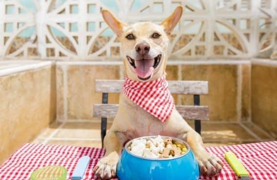 comida que pueden comer los perros