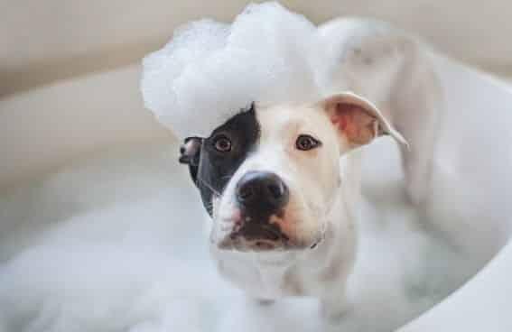 Higiene Diaria y Ejercicio de un Perro