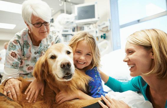 Razas de perros para terapia asistida