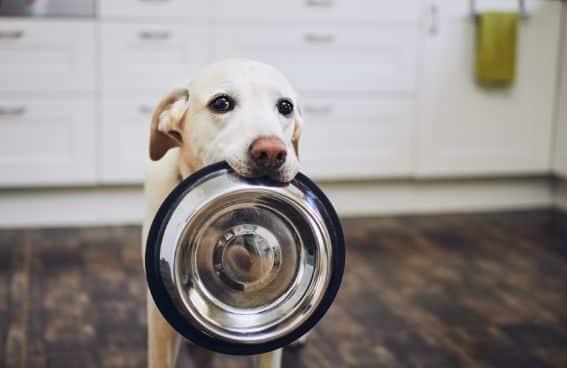 comida para humanos que puede comer un perro
